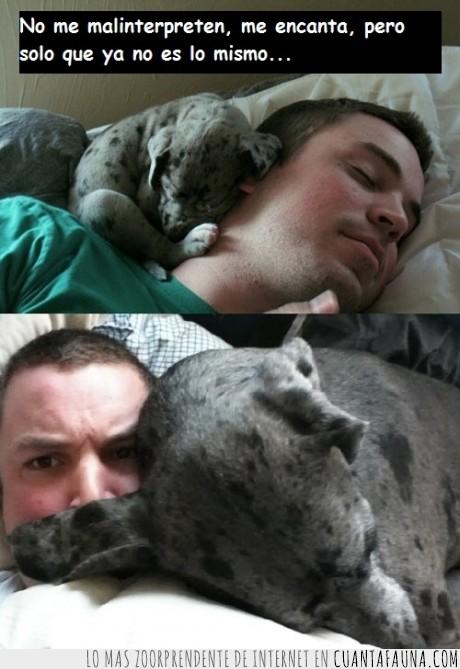 ahogar,amor,años,cachorro,cuello,dormir,encima,grande,incomodidad,pequeño,perro,que tierno ^^