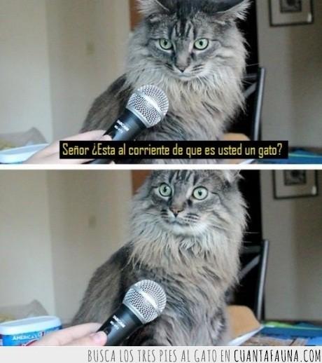 asombro,gato,micrófono,reportaje,sorpresa