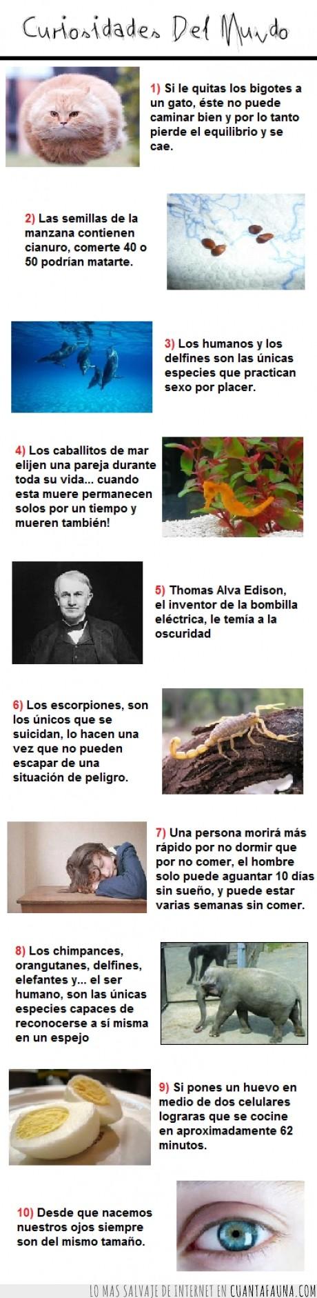 bombilla,elefante,escorpión,gato,ojo