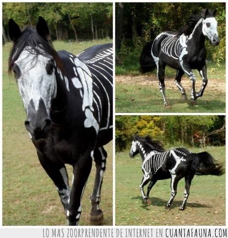 caballo,disfraz,esqueleto,halloween,pintar