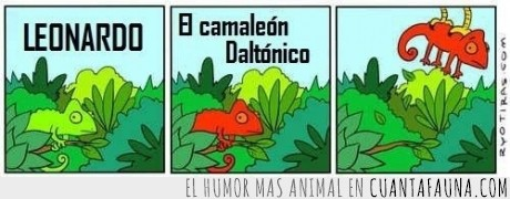 aguila,camaleón,daltónico,humor absurdo,leonardo