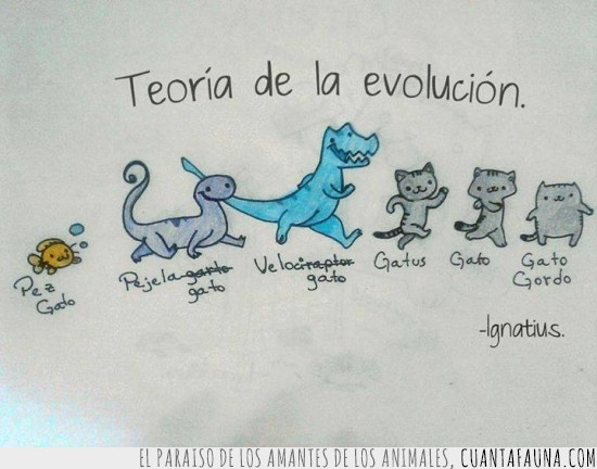 comic,evolucion,gato gordo,gatos,ignatius,pejelagato,pez gato,velocigato