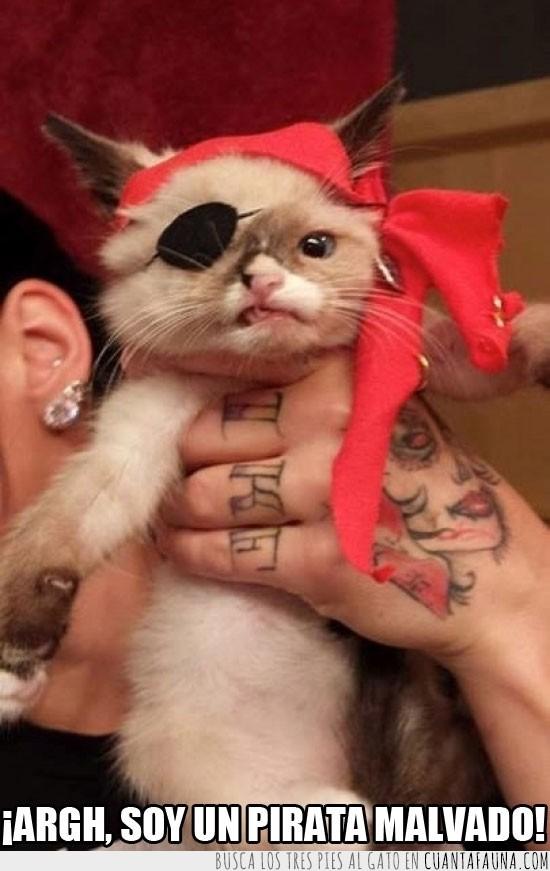 disfraz,gato,malvado,pañuelo,parche,pirata
