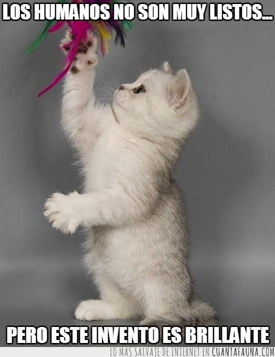 brillante,cordel,gato,invento,jugar,juguete,plumas