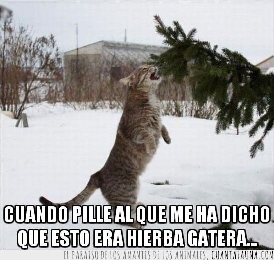 abeto,arbol,comer,gato,hierba gatera,morder,nieve,pobre gato