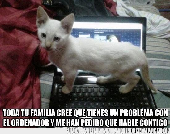 adicto,familia,gato,hablar contigo,ordenador,pedir,problema
