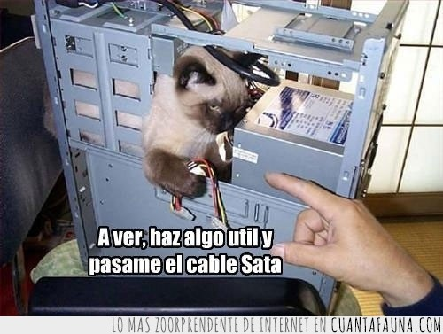 ayuda,cable,ordenador,técnico