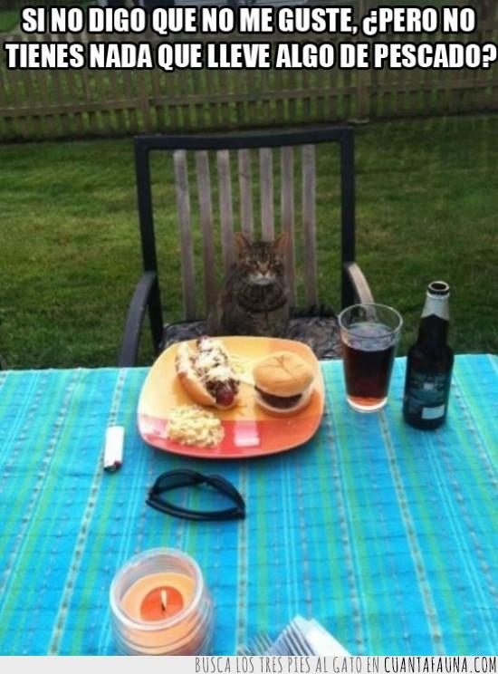 Comer,Comida,Gato,Hamburguesa,Hot dog,Mesa,Perrito caliente,Pescado,Plato