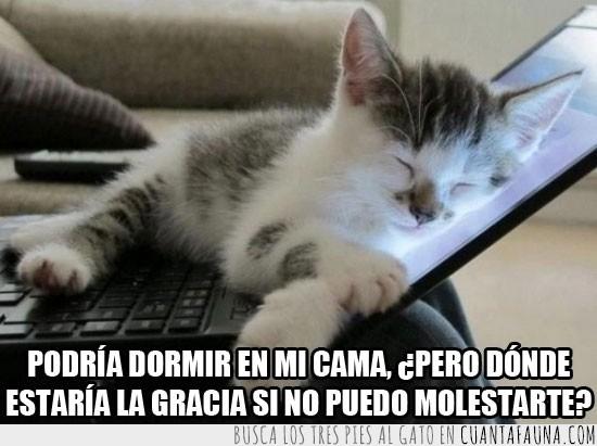 Caliente,Dormir,Gato,Laptop,Notebook,portatil,Sueño