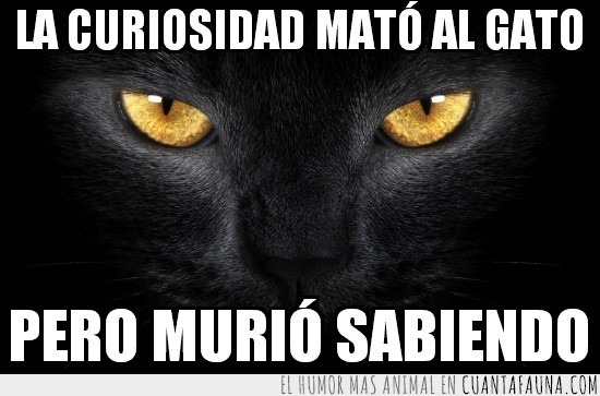curiosidad,Gato negro,matar,morir,saber,sabiendo