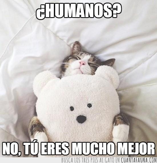 dormir,gato,monísimos,osito,peluche