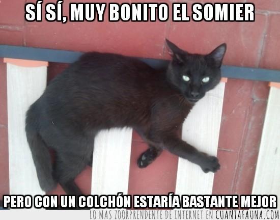 colchon,dormir,gato,somier,suelo,tablas