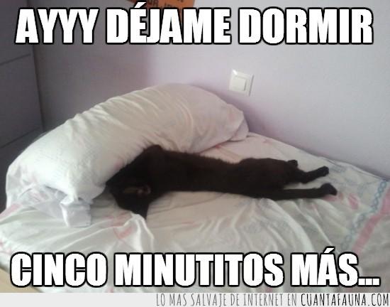 almohada,cama,cinco minutos mas,dormir,gato,quitar