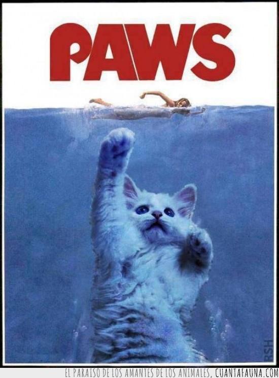 cartel,gatito,gato,jaws,paws,pelicula,tiburon