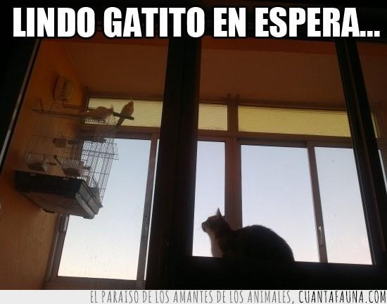 gato,jaula,lindo gatito,paciencia,pajaros
