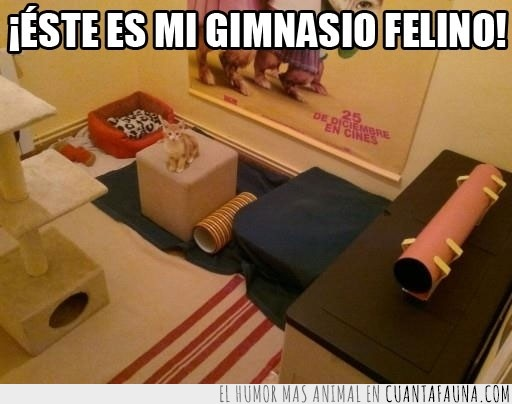 alfombra,caja,felino,gatuno,gimnasio,gym,postes,rascador,tubos