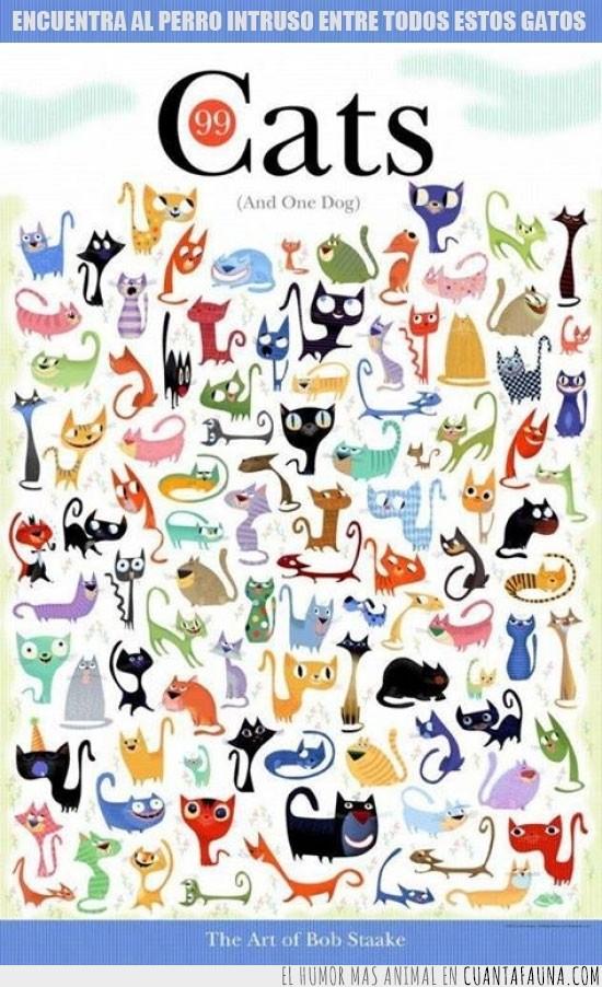 dominaran el mundo,ellos,gatos,intruso,me encantan los gatos,perro