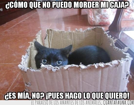 caja,destrozada,escondida,gato,mirada profunda,mordida,negro