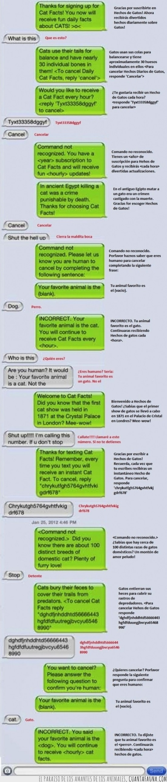 automatica,contestacion,Gatos,mensajes,whatsapp