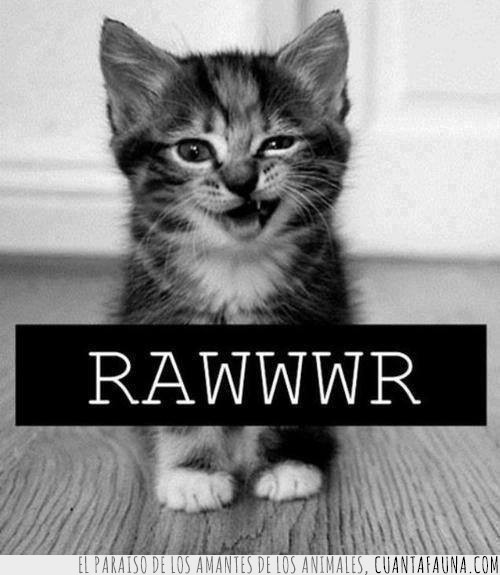 Adorable,Gato,Lindo,Rawr