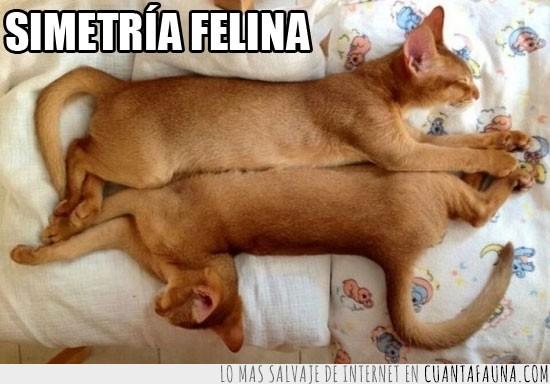 felina,opuestos,simetria,tumbados