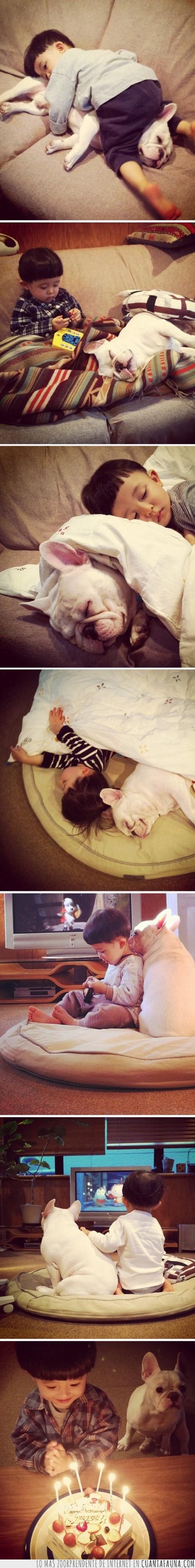 amigo,asiatico,bulldog,capa,casco,chino,dormir,junto,niño,pelo,perro