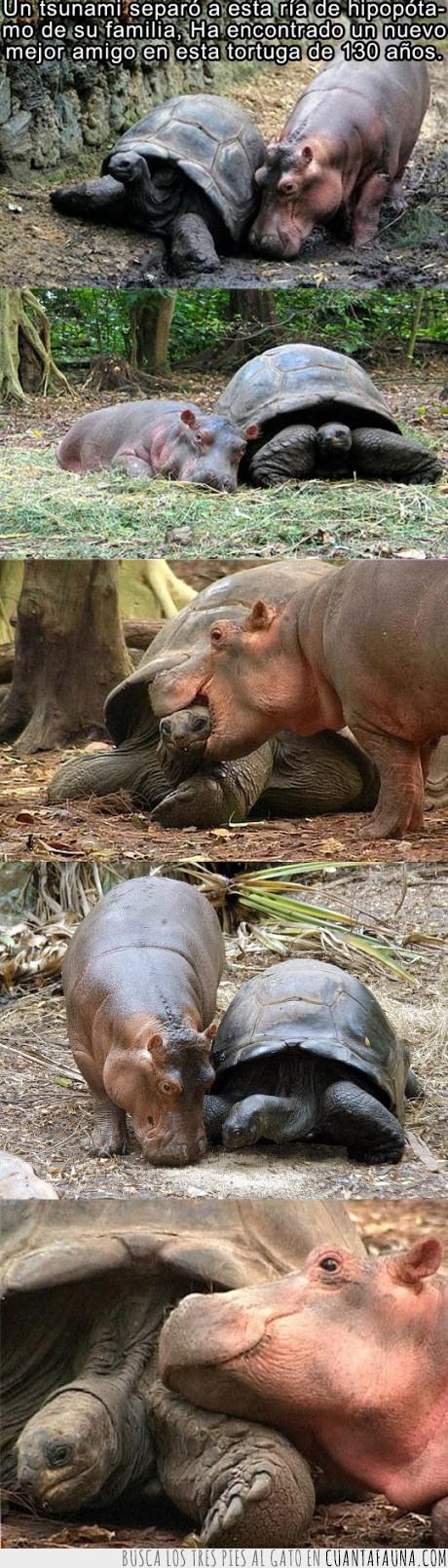 amigo,familia,hipopotamo,tortuga,tsunami