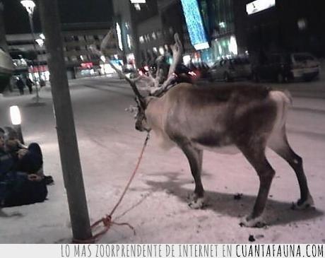 atar,ciervo,cuerda,escapar,farola,no sabría decirte el animal,reno