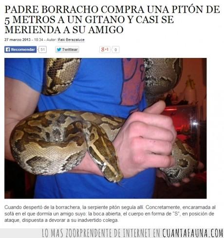amigo,borracho,comer,compra,gypsy,piton,serpiente
