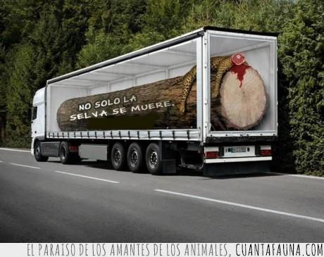animales,camión,decoracion,leopardo,morir,selva,tronco