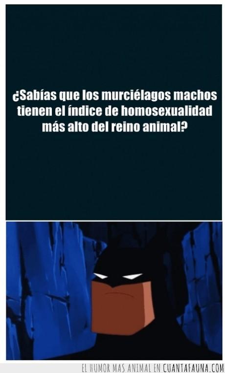 animales,batman,DC universe,en el fondo todos lo sabíamos...,murcielago,porcentaje,robin
