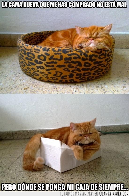 caja,cama,carton,comoda,la mejor