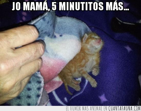5 minutos mas,cachorro,dormir,gatito,mama