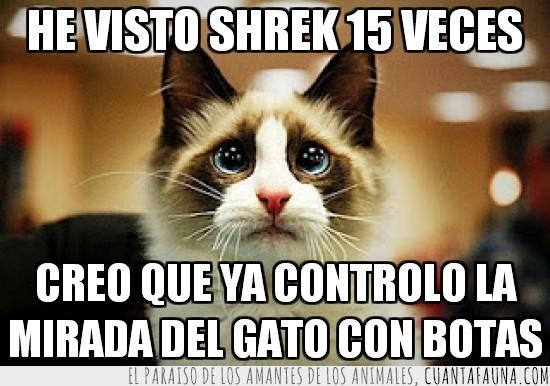 15 veces,gato,gato con botas,mama,pedir permiso,querer,salir,shrek,tierno