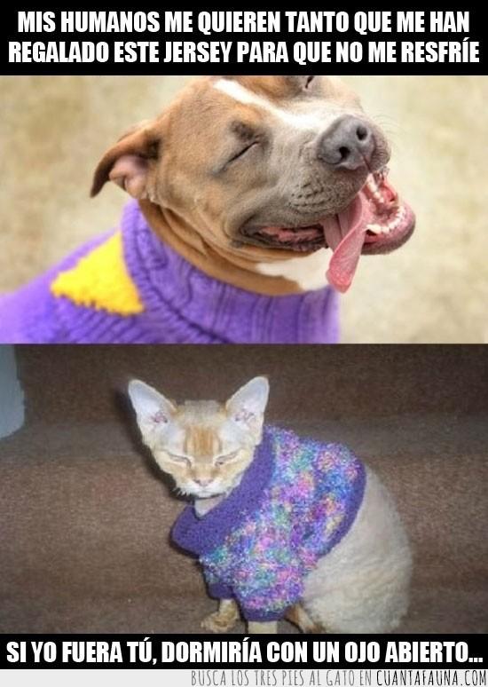 abrigo,enfadado,Gato,jersey,molesto,perro,sweater