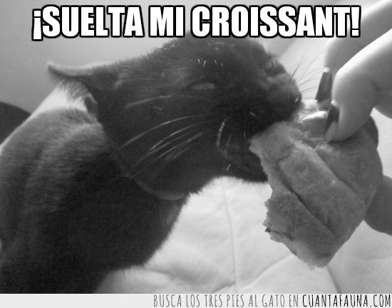 comer,croissant,gato,mordisco,negro,soltar