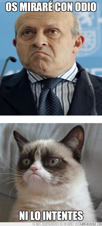 Grumpy cat,gruñon,Ministro Wert,mirar,odio