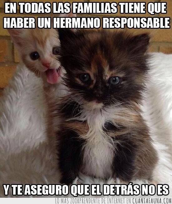 cachorros,familia,gato,gruñon,hermano responsable,lengua,molesto