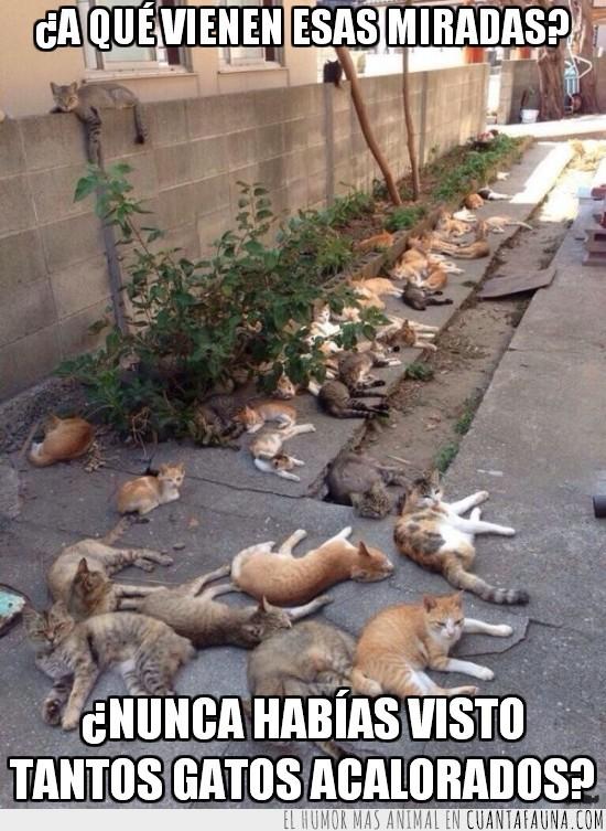 acalorados,callejon,gatos,reunidos,tumbados
