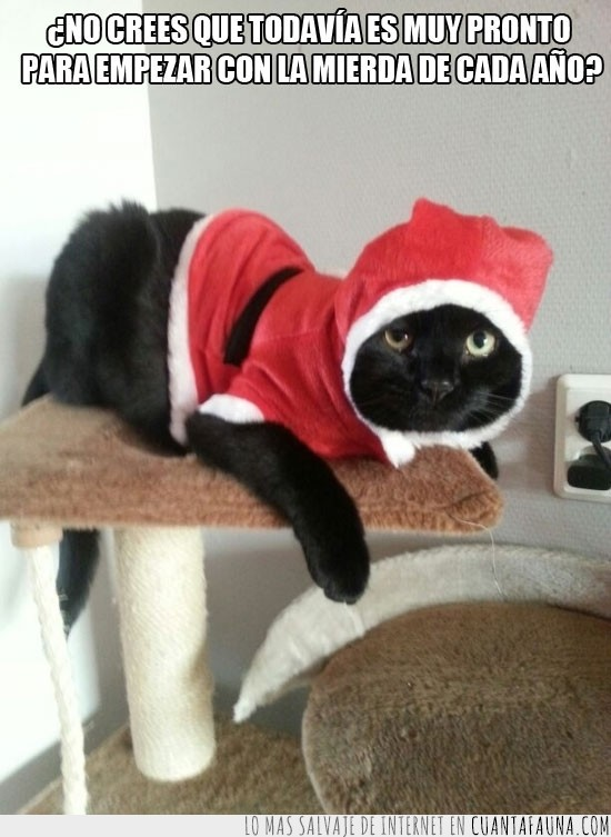 disfraz,gato negro,navidad,papa noel,regalo,te odia