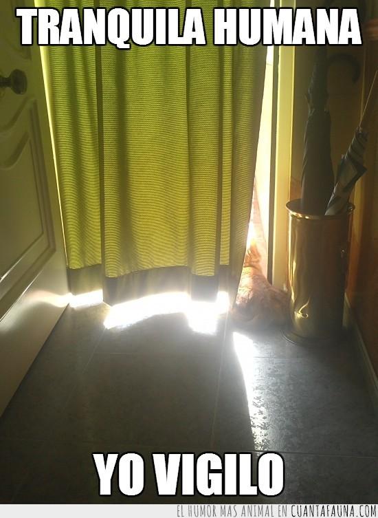 al solecito,cortina,mirar,ventana,vigilar
