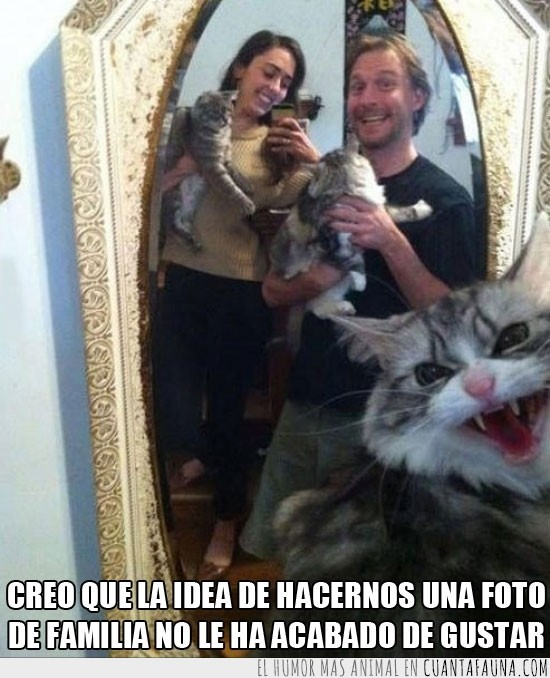 enfadado,espejo,familia,foto,Gato,gustar