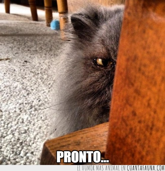 escondido,gato,mala leche,mirada,pronto...,vigilar