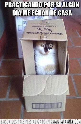cajas,carton,casa,juego,sin hogar,sorpresa