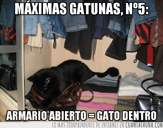 abierto,armario,dentro,felina,gato,gatuna,maxima