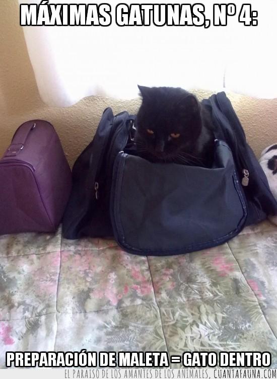 4,gato dentro,maleta,maximas gatunas,preparar