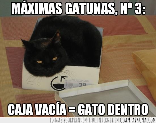 3,caja vacia,gato dentro,gatuna,maxima