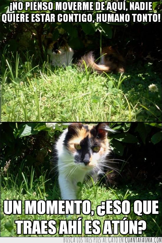 atun,comer,gato,interesado,querer,sol,sombra