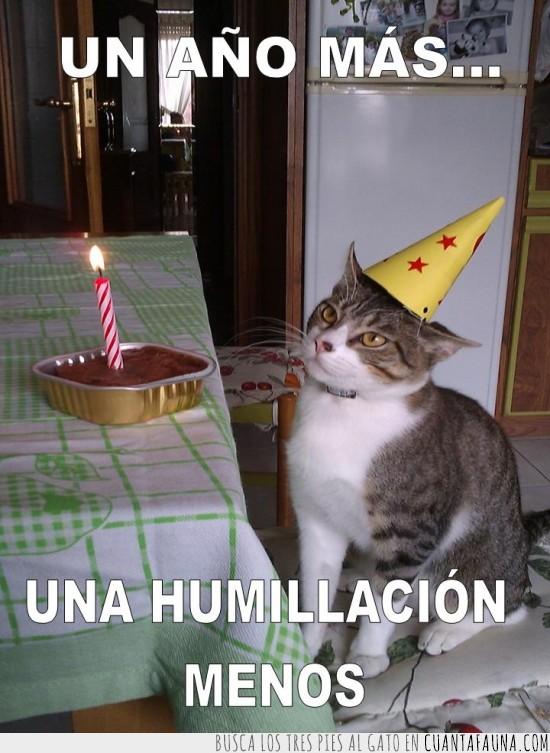 Feliz cumpleanos meme gato