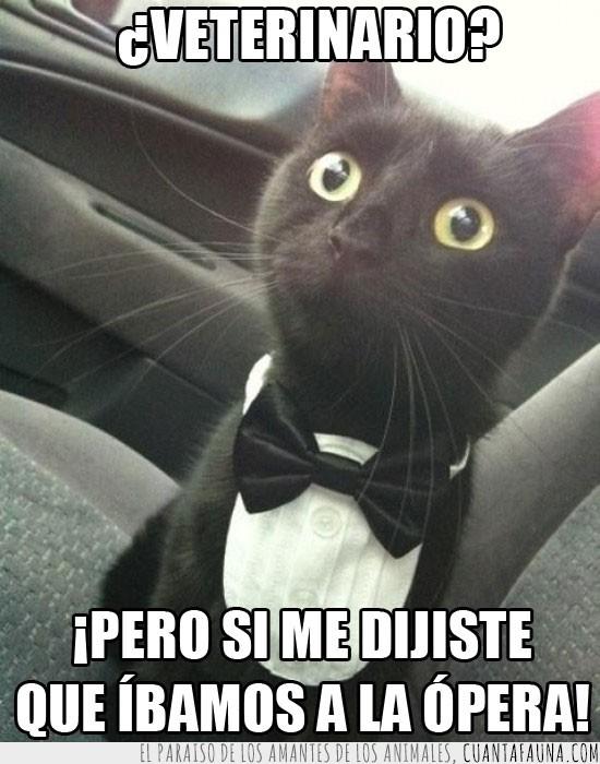 decir,desilusion,gato negro,opera,smoking